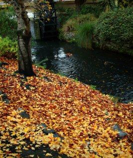 Autumn along the Avon