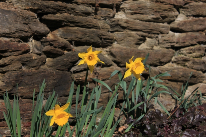 Spring in Arrowtown